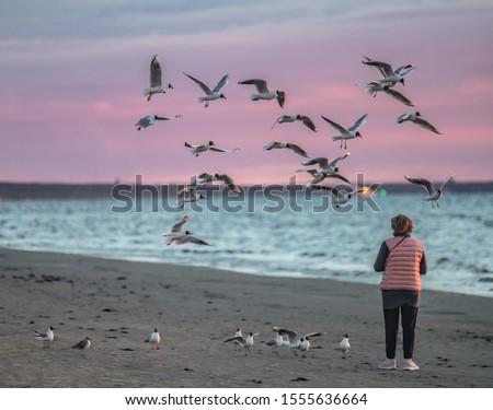 Jurmala, Latvia. Woman feeding birds. sky birds flying. nature birds flying. nature sea Foto stock ©