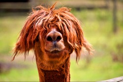 Just a bad hair day
