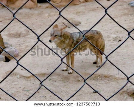 Just a pic of a coyote