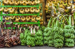 Just Bananas. A store selling only bananas. Many kind of bananas are nicely set and displayed - raw and ripened, red, green, and yellow. Small bunches hang on wooden bar, big bunches sit on the floor.