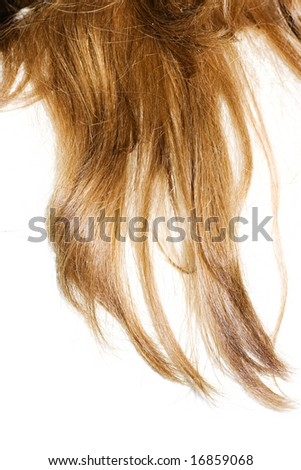 just beautiful hair on white