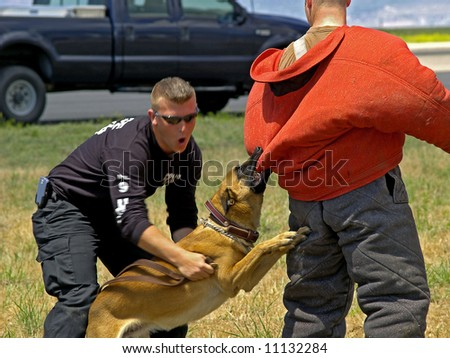 K-9 dog training attacking  a subject under the command on the dogs trainer