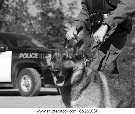 K9 unit police officer with his dog and police vehicle in the background, desaturated. The color version of this image is also in my portfolio.