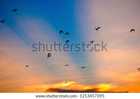 Ka Yang birds fly back to the nest at sunset. #1213457395
