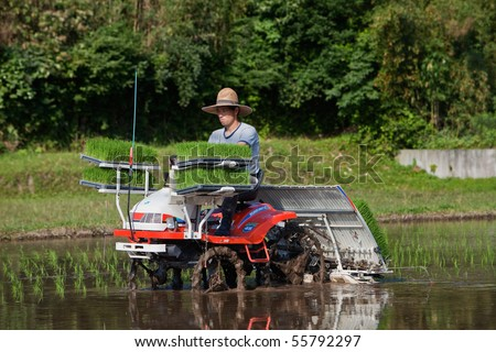 KAGOSHIMA, JAPAN - JUNE 5: A Japanese rice farmer rides a tractor to plant a  flooded rice field with new rice shoots June 5, 2010, in Kagoshima, Japan. - stock photo