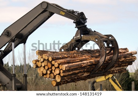 KAITAIA,NZ - JULY 30:Tractor carrying logs on July 30 2013. It\'s New Zealand third largest export earner with international sales in excess of $4 billion.