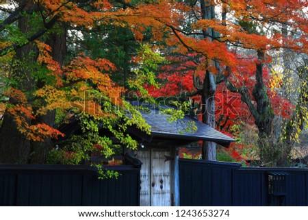 Kakunodate in Akita Prefecture, autumn leaves #1243653274
