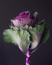 Kale edible flower still life floral bloom