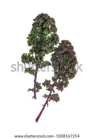 kale, green kale, leafs, Brassica oleracea var sabellica, isolated on white