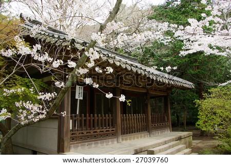 Kamakura Kotoku-in Japan cherry temple spring building - stock photo