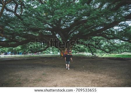 KANCHANABURI, THAILAND - July11, 2017: Giant tree in Kanchanaburi, giant monkey tree - located in Kanchanaburi, Thailand, the largest Monkey Pod in Thailand and a branch of Thailand Kanchanaburi #709533655