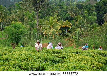 KANDY, SRI LANKA - DEC 4: Tamil women tea pickers at the plantation Dec 4, 2008 in Kandy, Sri Lanka. At this very time Government troops started attacking Tamil militants in the North of Sri Lanka