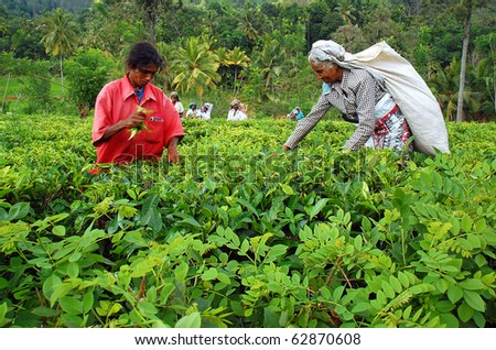 KANDY, SRI LANKA - DEC 4: Tamil women tea pickers at the plantation Dec 4, 2008 in Kandy, Sri Lanka.