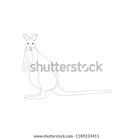 Kangaroo animal illustration on the white background.  illustration