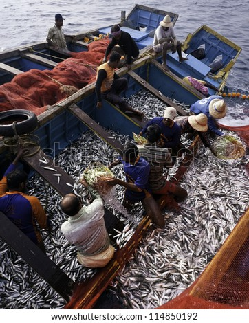 KANNUR - DECEMBER 22: unidentified fishermen pull in a large net of sardine along the Malabar Coast on December 22, 2011 near Mapilla Bay Harbour, Kannur, Kerala, India. #114850192