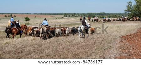 Kansas Longhorn Cattle Drive