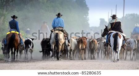 Kansas Longhorn Cattle Trail Drive