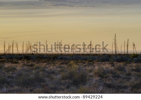karroo sunrise,blouboskuil ,graaf reinet,eastern cape,south africa - stock photo
