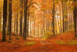 Kashubia, Poland/ Autumn forest.
