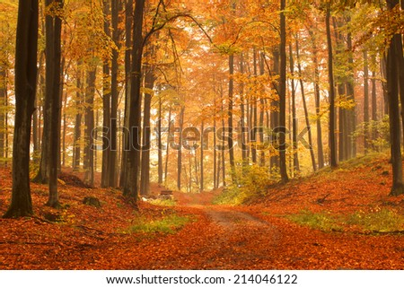 Kashubia, Poland/ Autumn forest.