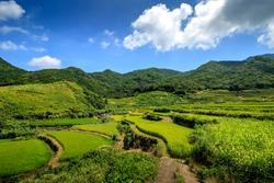 Kasuga tanada, Japanese terraced rice field