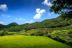 kasuga tanada, terraced rice field in Hirado, Nagasaki, Japan