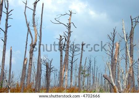 Katrina hurricane destruction still visible two years later.