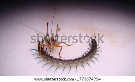 katydid and Centipede on a white background