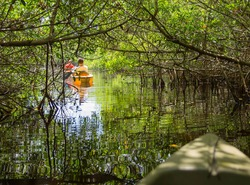 Kayaking in mangrove tunnels in Everglades National park, Florida, USA