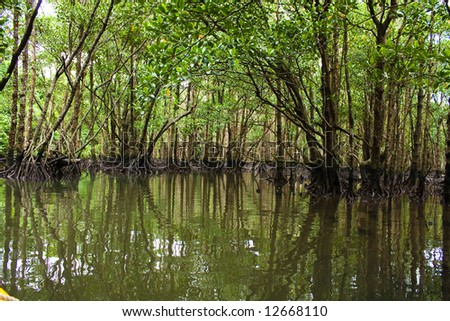 Kayaking in the mangrove jungle