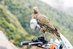 kea on the rearview mirror motorcycle