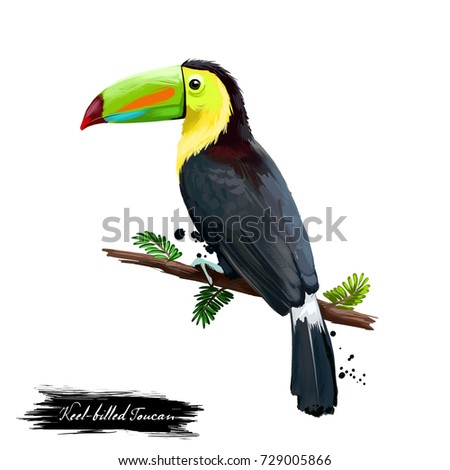 Keel-billed Toucan digital art illustration isolated on white. Sulfur-breastedor rainbow-billed toucan sitting on branch, national bird of Belize. Plumage mainly black with yellow neck and chest