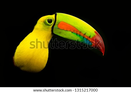 Keel-billed Toucan - Ramphastos sulfuratus  also known as sulfur-breasted toucan or rainbow-billed toucan, Latin American member of the toucan family, national bird of Belize.