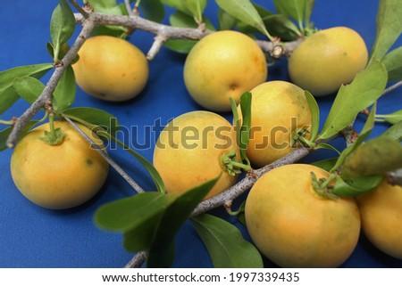 Kei apple. Dovyalis caffra, Aberia caffra the Umkokola, Kei apple, Kayaba, Kai apple, or Kau apple. Tasty fruit resembling a mild flavored apricot. Excellent fruit tree for dry areas. Stockfoto ©