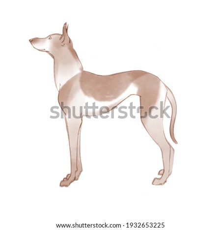 Kelb tal-Fenek Hand Drawn Illustrarion Stock fotó ©