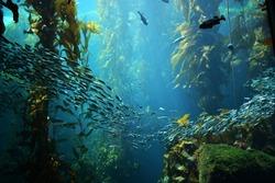 kelp forest views from below