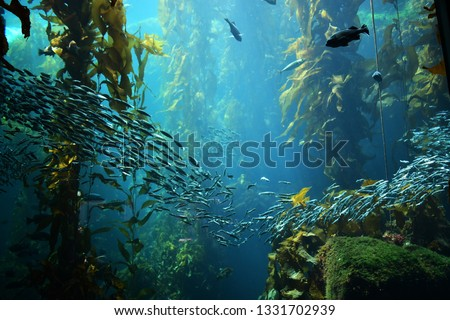 kelp forest views from below Stock photo ©