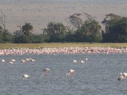kenya, masai mara, serengeti, amboseli national park, Kilimanjaro, africa, wild animals