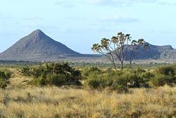 Kenyan savannah landscape Samburu summer. Africa, Kenya