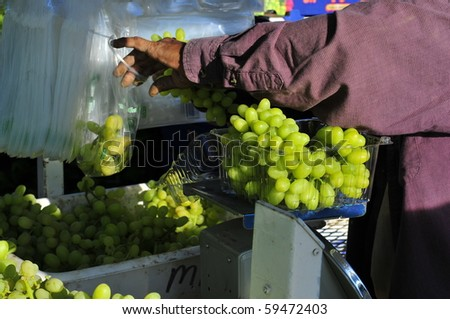 KERN COUNTY CA - AUG 21:The grape harvest is in full swing in vineyards on August 21, 2010 in Kern County, California. Field hand packs grapes for distribution to markets.