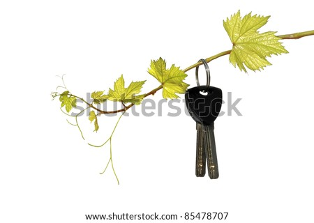Keys on a young grapevine on the white background