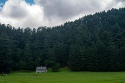 Khajjiar Mini switzerland of india, Dark landscape with view of devdar tree and house.