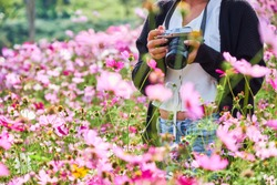 Khao kho Phetchabun,Thaiand. Travel of Photographer woman,take photo with camera on beautiful cosmos flowers. ,Travel and Photographer concept.