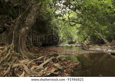 KhaoYai rain-forests; Between the walk way from PhaKluaiMai Camping point to the Heo Suwat Waterfall (Namtok Heo Suwat) Khao Yai National Park Nakhon Ratchasima province Thailand.