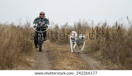Kharkov, UKRAINE - November 15, 2014: Irina Kasinova at Bikejoring with two dogs Women\'s 3100 m at Sled dogs dry land race Autumn Cup - 2014