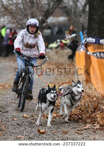 Kharkov, UKRAINE -?? November 15, 2014: Tatiana Filatova at Bikejoring with two dogs Women\'s 3100 m at Sled dogs dry land race Autumn Cup - 2014