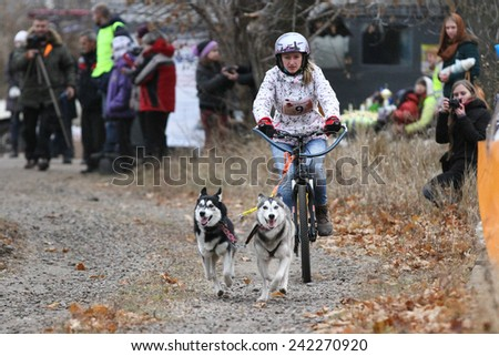 Kharkov, UKRAINE - November 15, 2014: Tatiana Filatova at Bikejoring with two dogs Women\'s 3100 m at Sled dogs dry land race Autumn Cup - 2014