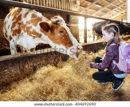 Kid at a milk farm feeding cow