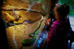 Kid at zoo communicating with snake in terrarium