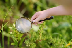 Kid exploring nature with magnifying glass. Close up. Little boy looking at flower with magnifier. Summer activity for inquisitive child